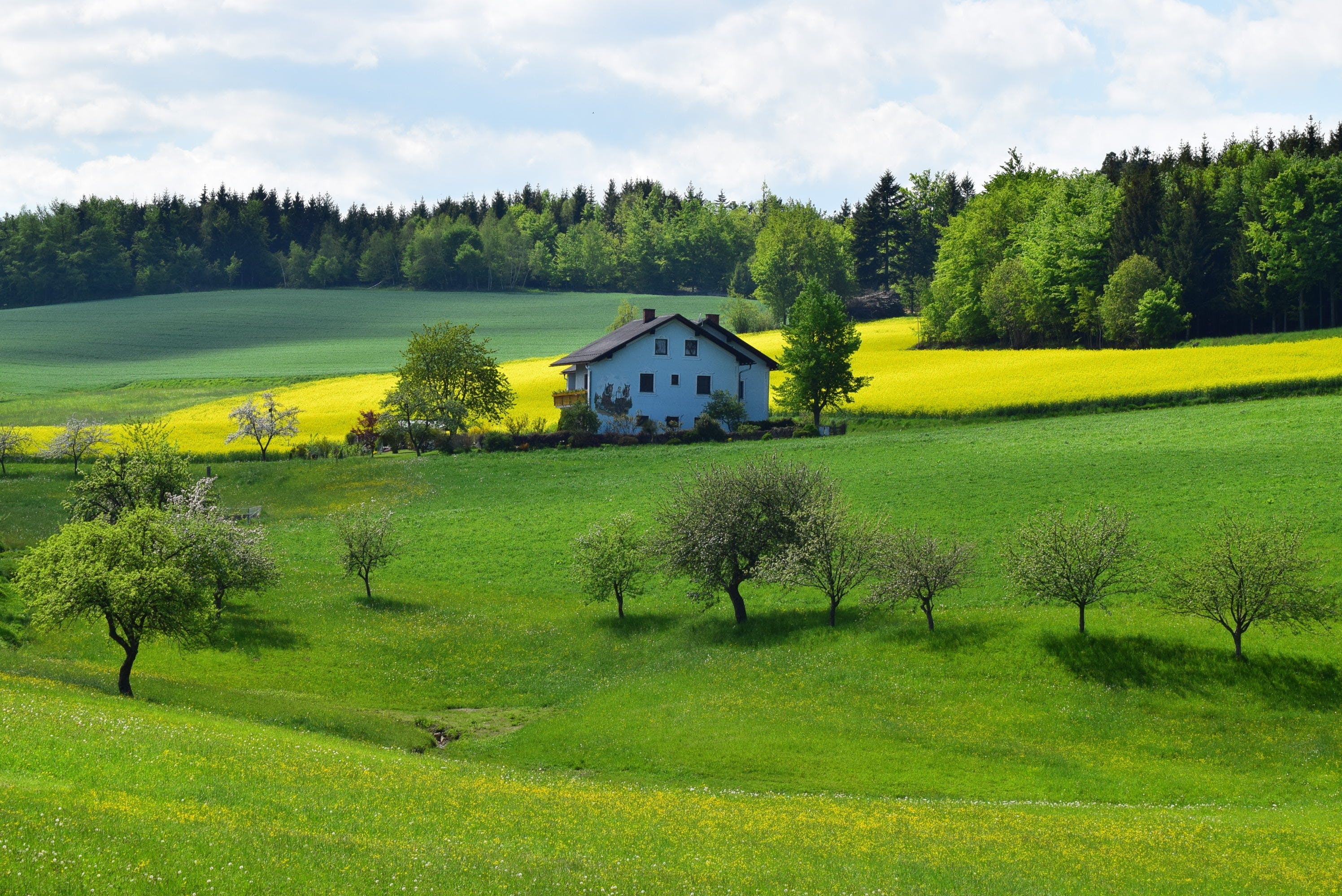 agriculture, country, countryside
