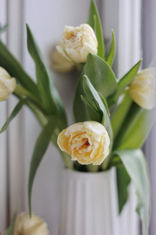 Bouquet of yellow delicate tulips in vase placed on table in modern apartment