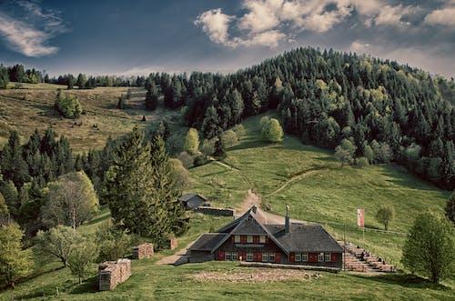 山丘, 景觀, 森林, 樹木 的 免費圖庫相片