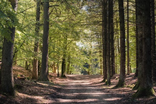Sandy path in forest in summer