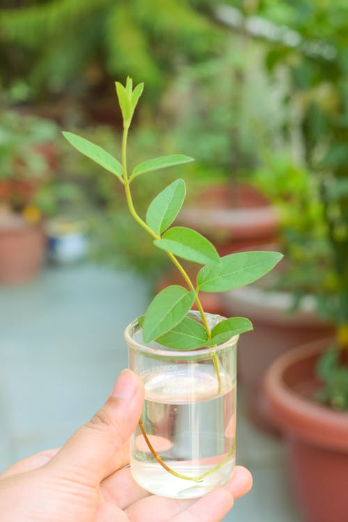Plant with green leaves in water in jar