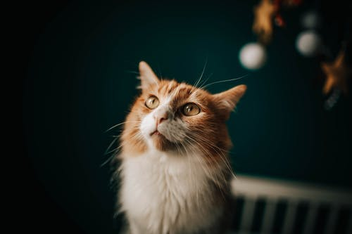 Focused cat with green eyes in apartment