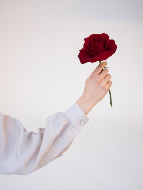 Fotos de stock gratuitas de amable, anónimo, blusa, bonito