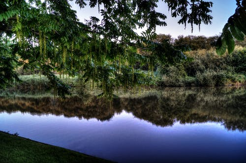 Landscape Photography of Green Trees and Body of Water