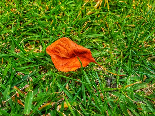 Free stock photo of autumn leaf, green grass, greensward