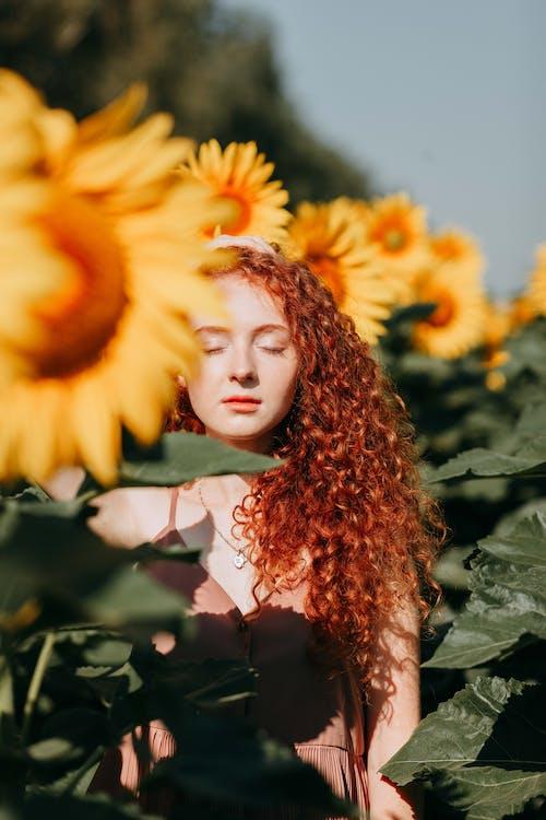 açık hava, ayçiçeği, ayçiçeği tarlası, bukleli saç içeren Ücretsiz stok fotoğraf