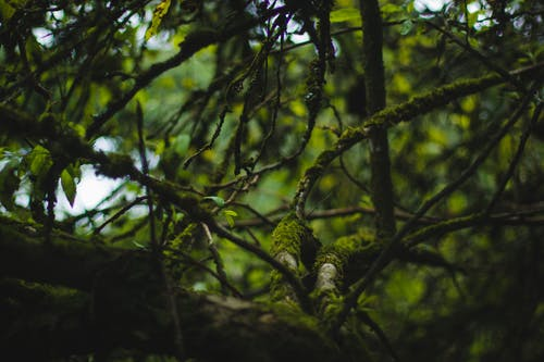 Free stock photo of bokeh, branches, environment, environment friendly