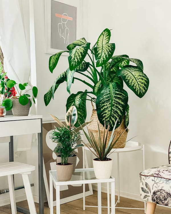 主臥室, 仙人掌植物, 內飾 的 免費圖庫相片