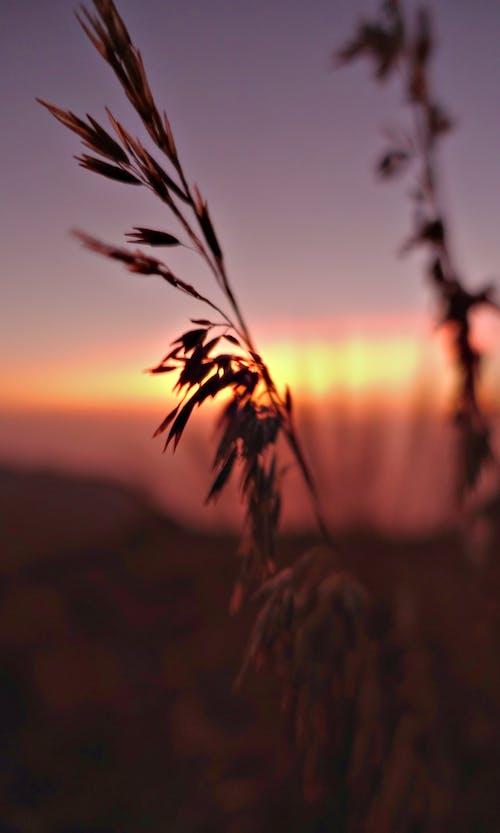 Darmowe zdjęcie z galerii z kwiat, natura, słońce