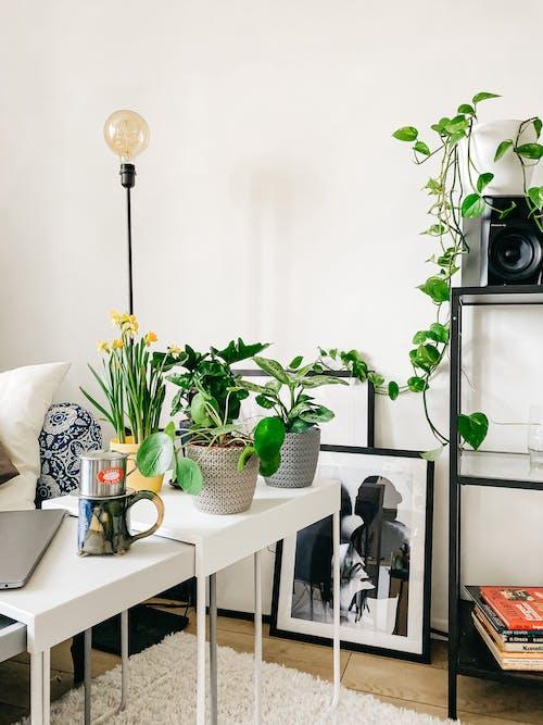 Δωρεάν στοκ φωτογραφιών με ανθοφόρα φυτά, άνοιξη, ανοιξιάτικα λουλούδια