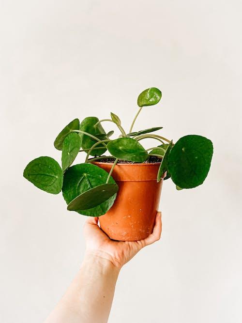 Δωρεάν στοκ φωτογραφιών με ανάπτυξη, ανθοφόρα φυτά, άνοιξη