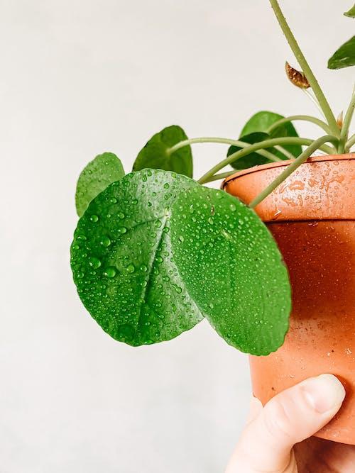 Δωρεάν στοκ φωτογραφιών με αγάπη, ανάπτυξη, ανθοφόρα φυτά