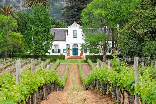 Foto profissional grátis de África do Sul, agricultura, aldeia, ao ar livre