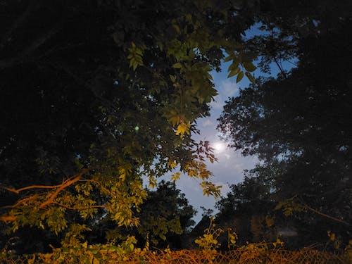 Free stock photo of austin texas, central texas, full moon