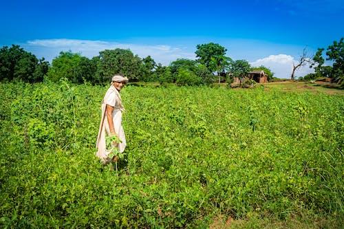 Fotos de stock gratuitas de agricultor, granja, granjero