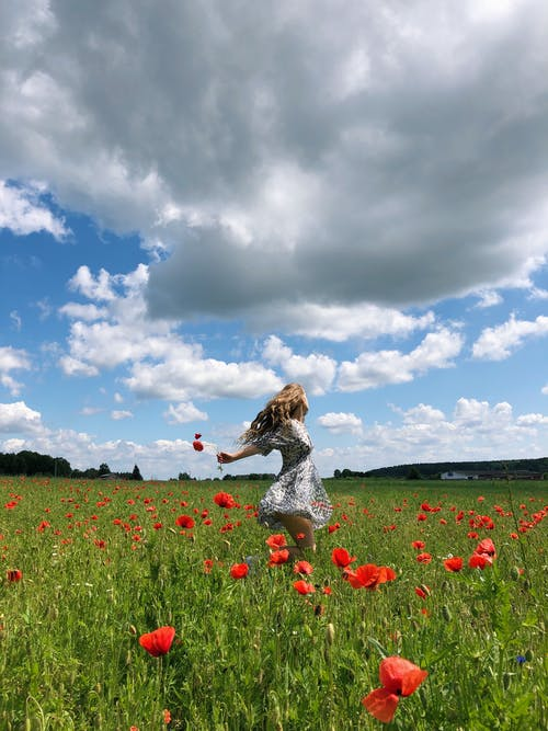 Woman in White and Black Dress Standing on Red Flower Field Under Blue and White Cloudy