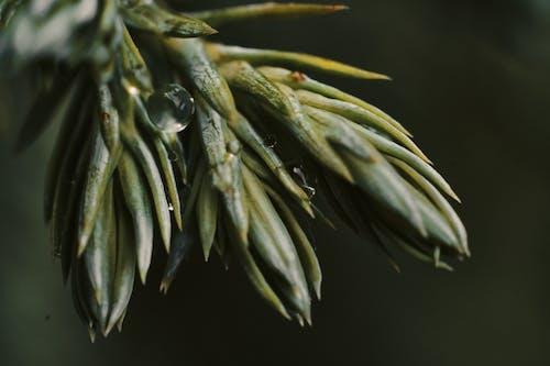Free stock photo of fotografia di piante, Gocce, gocce d'acqua, gocce di rugiada