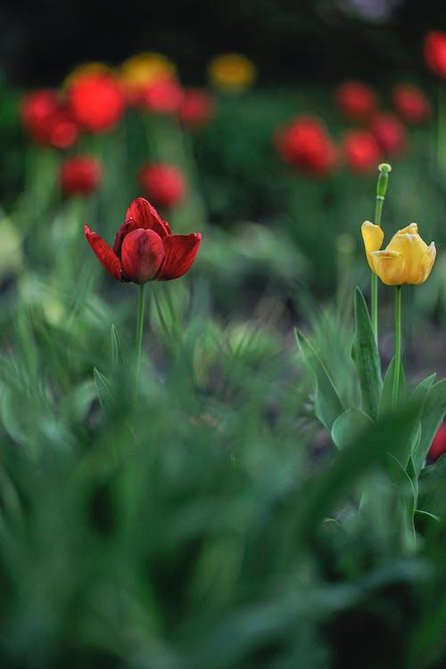 Bright blooming flowers in garden in summer