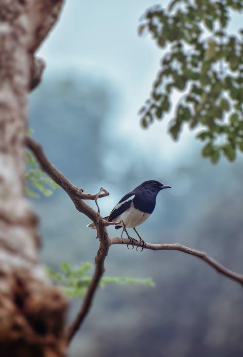 Kostnadsfri bild av 2020, bangladesh, bästa fotografering, dagsljus
