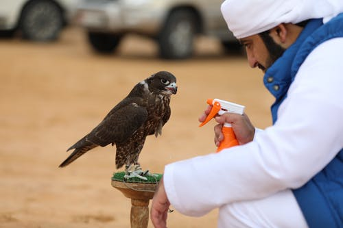 Free stock photo of abu dhabi, al aain, arabia