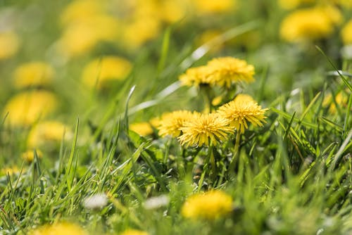Yellow Flowers on Green Grass