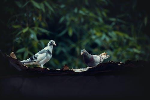 Kostnadsfri bild av bangladesh, bäst, djur, djurfotografi