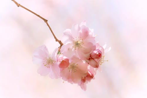 Free stock photo of backlight, blossom, blossoms, botanic garden