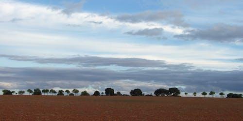 Kostenloses Stock Foto zu abendhimmel, aussicht, bäume, feld