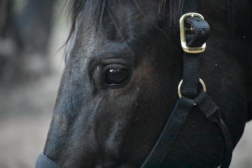 Základová fotografie zdarma na téma jízda na koni, kempování, koňská hlava, kůň