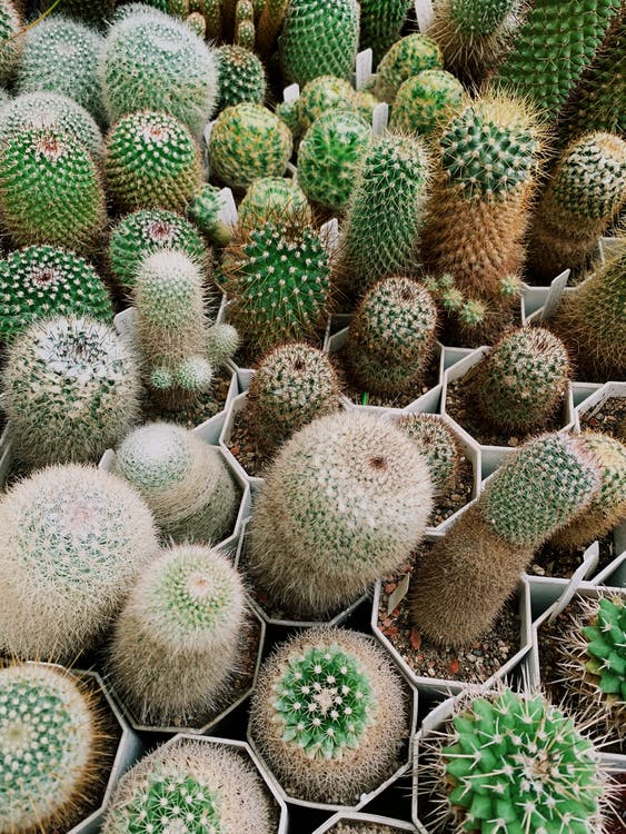 Green Cactus Plant in Brown Woven Baskets
