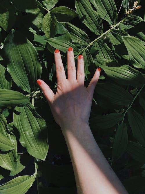 Gratis lagerfoto af blad, blomst, farve, flora