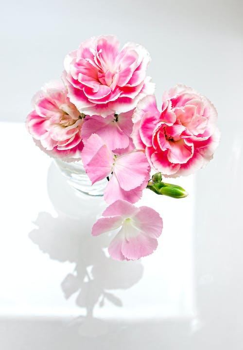 Bunch of tender Dianthus caryophyllus flowers in glass vase