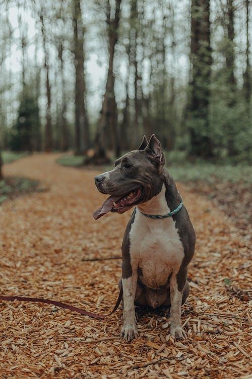 Dog sitting in park in autumn day