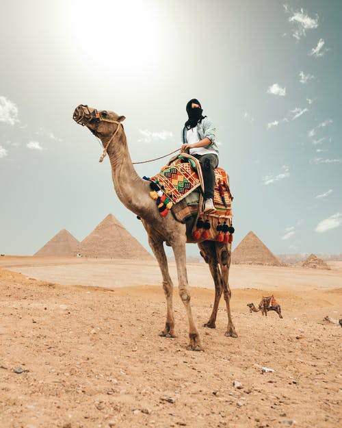 Camel with tourist on back in desert