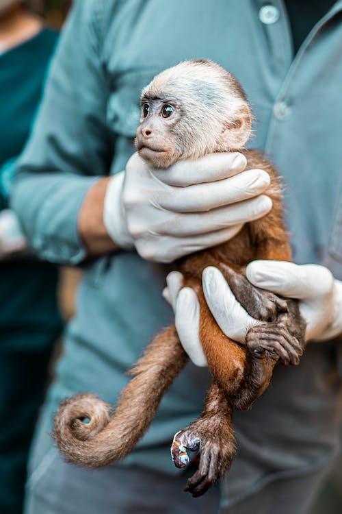 Gratis stockfoto met aap, anoniem, beest