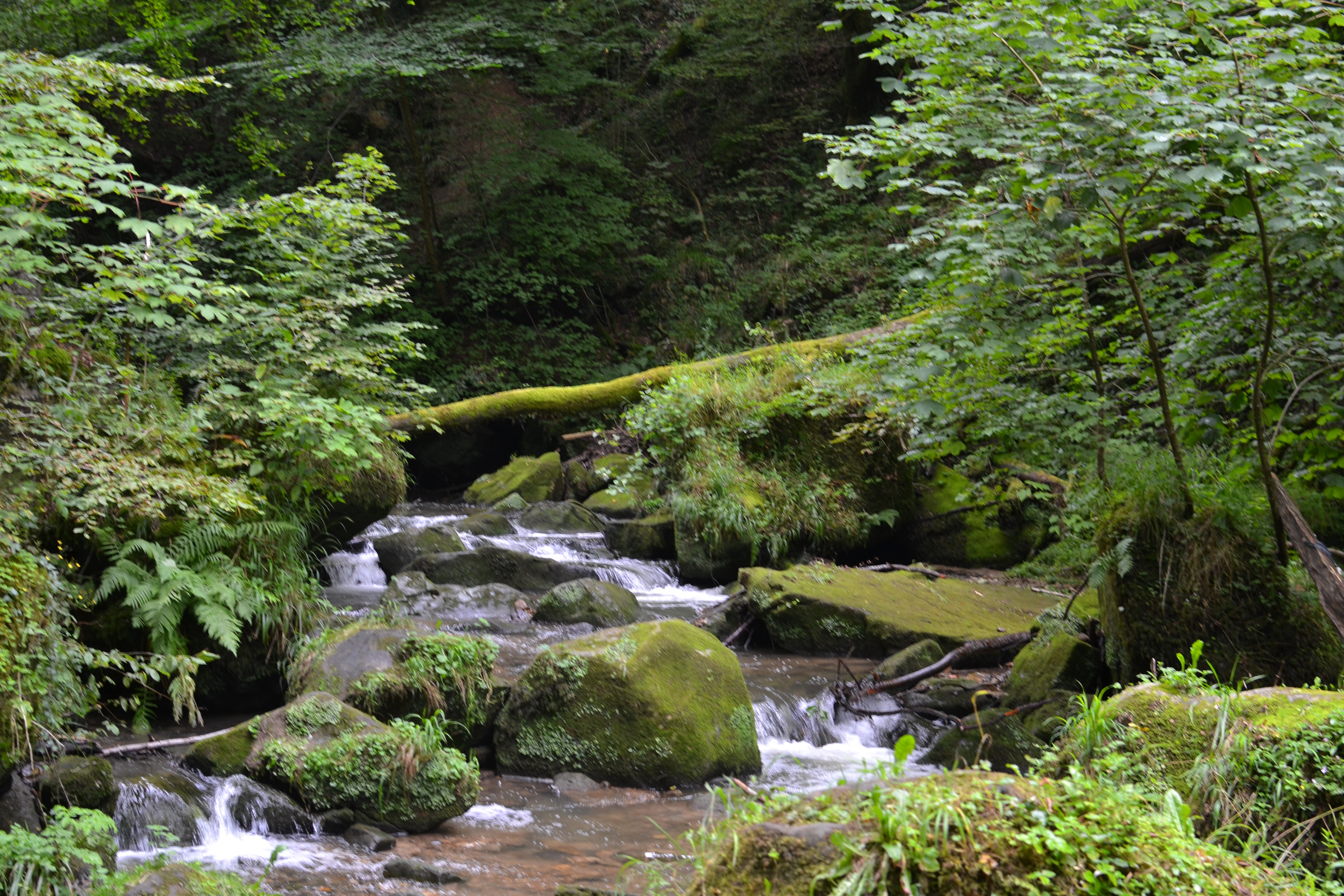 Free stock photo of forest, green, Luxembourg