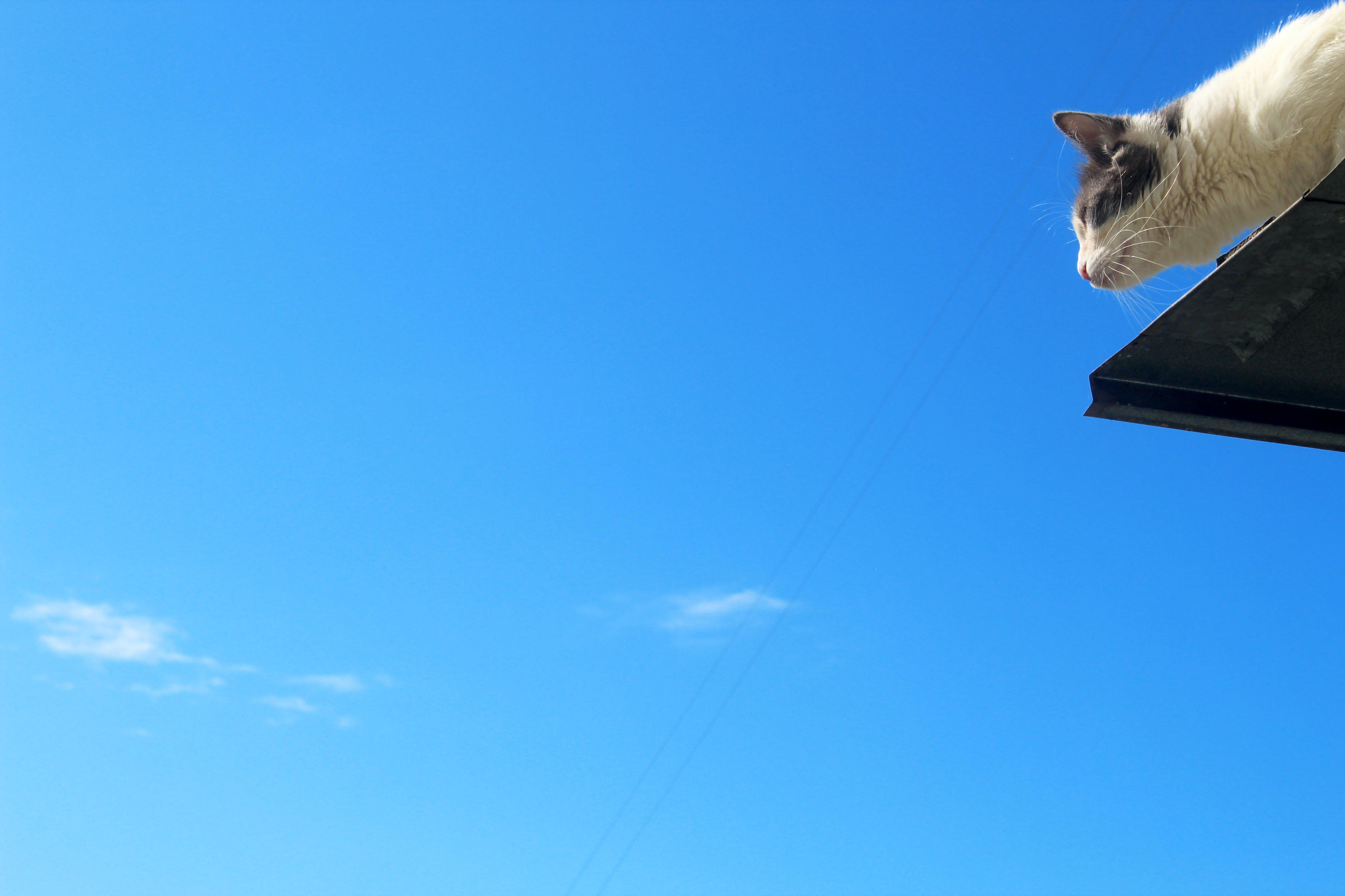 Základová fotografie zdarma na téma den, domácí, kočka, modrá