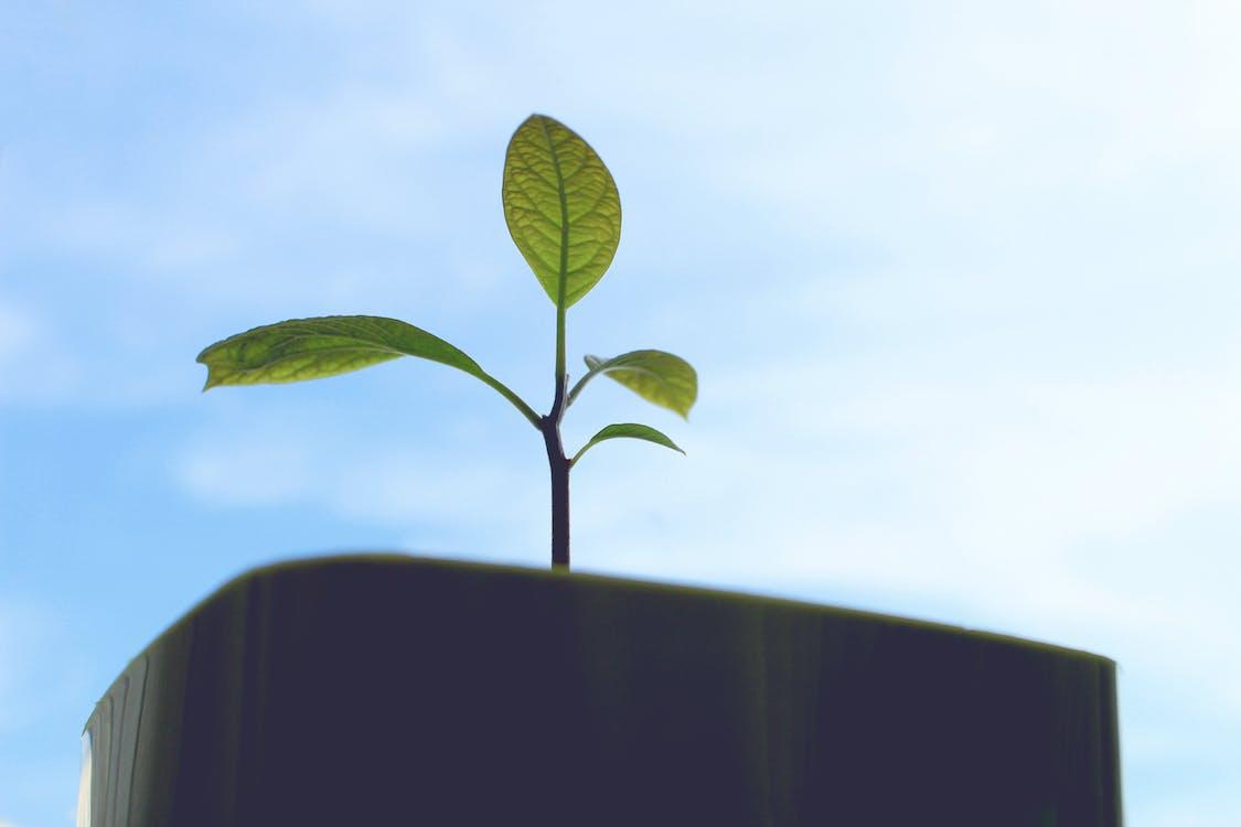 árbol, cielo, crecer