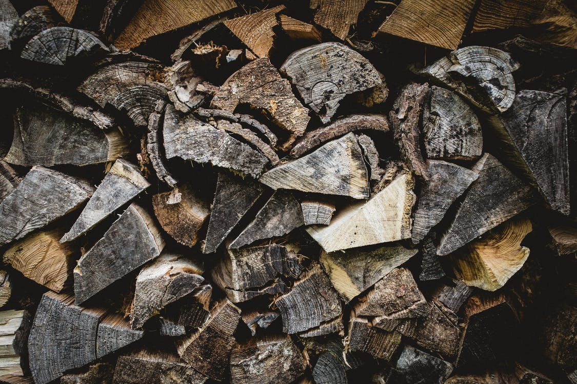 Free stock photo of forest, log, logs