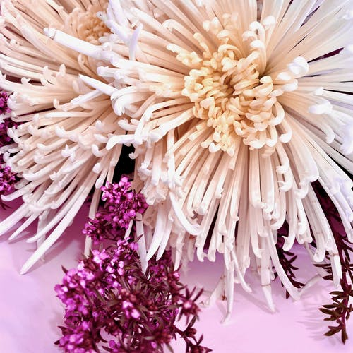 Free stock photo of bouquet of flowers, bunch of flowers, chrysanthemum, floral arrangement