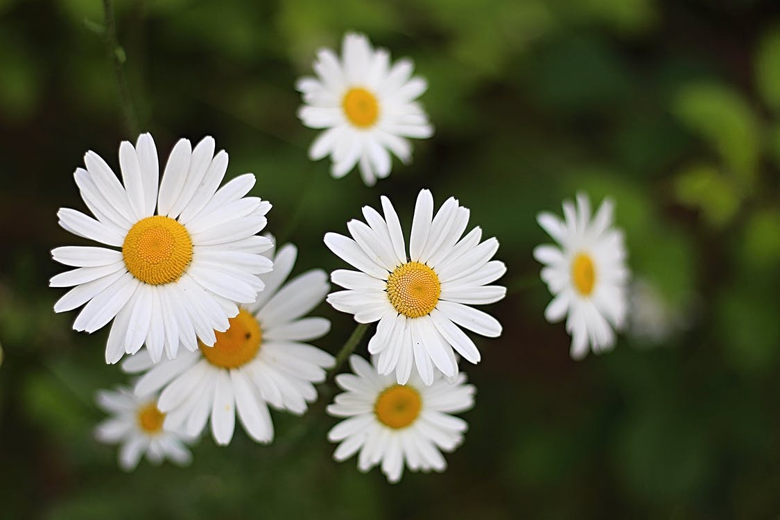blommor, vackra blommor