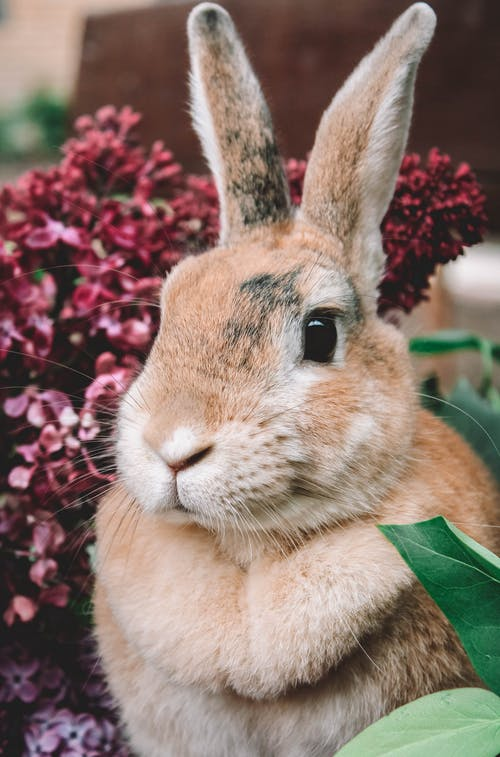 Brown Rabbit on Red Textile