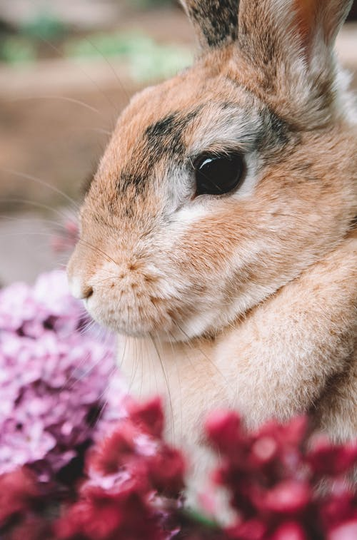 Brown Rabbit on Purple and White Textile