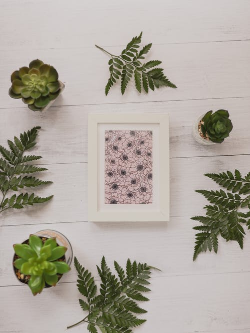 Top view of fern green leaves on white wooden table composed with potted succulent plants and frame with ornamental painting