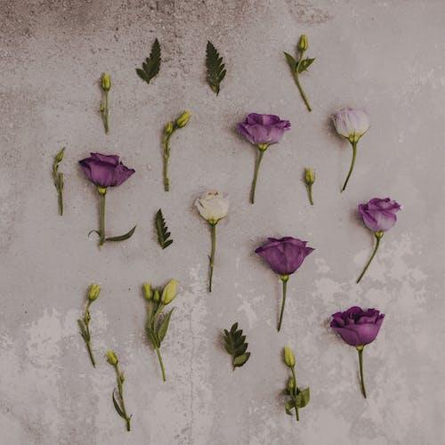 Gratis stockfoto met blad, bloeiend, bloem, bloemen