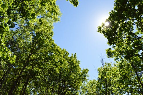 Free stock photo of blue, day, forest, green