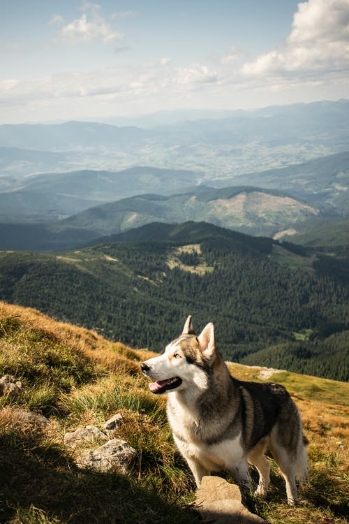 Obedient purebred dog resting on mountain slope on sunny day