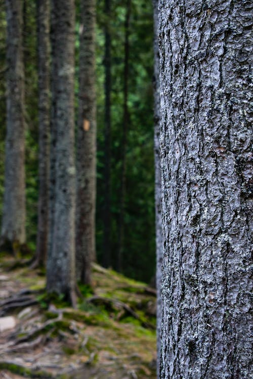 Textured tree trunk in green woods