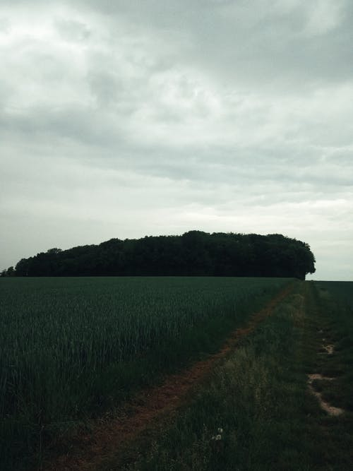 Picturesque scenery of endless green agricultural field near lush trees against cloudy sky