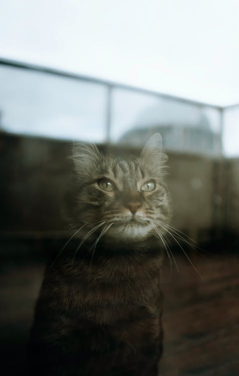 Black Cat Near A Glass Window